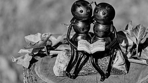 nooit een mier